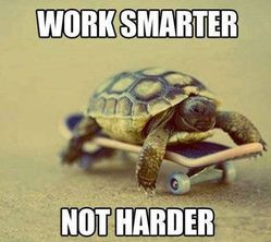 funny-pictures-work-smarter-not-harder-turtle-skateboard
