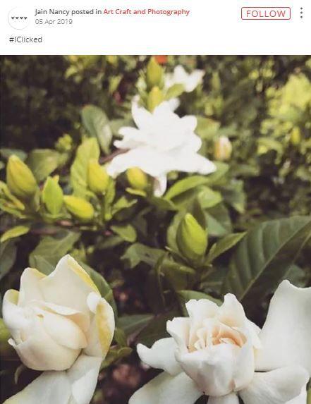 iclick flowers